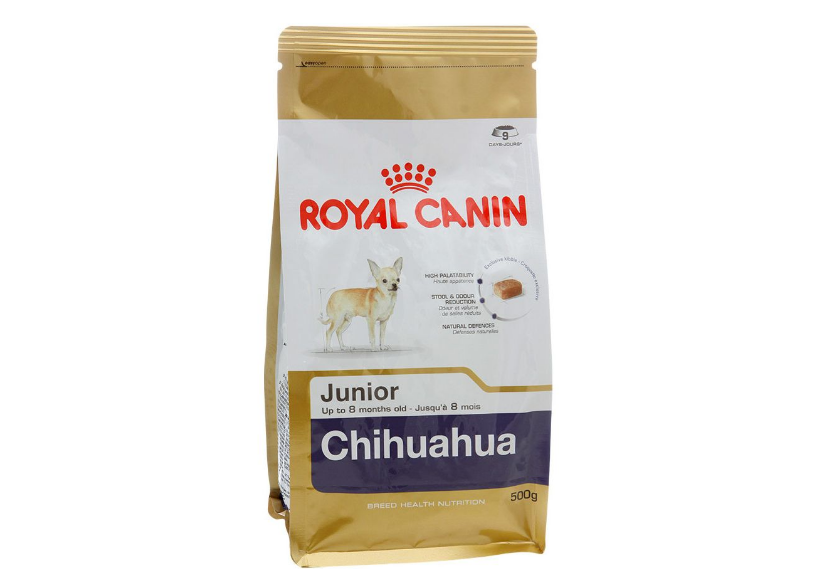 Mini Chihuahua Keterangan Kandungan Dan Ciri Ciri Menjaga Anjing Kerdil