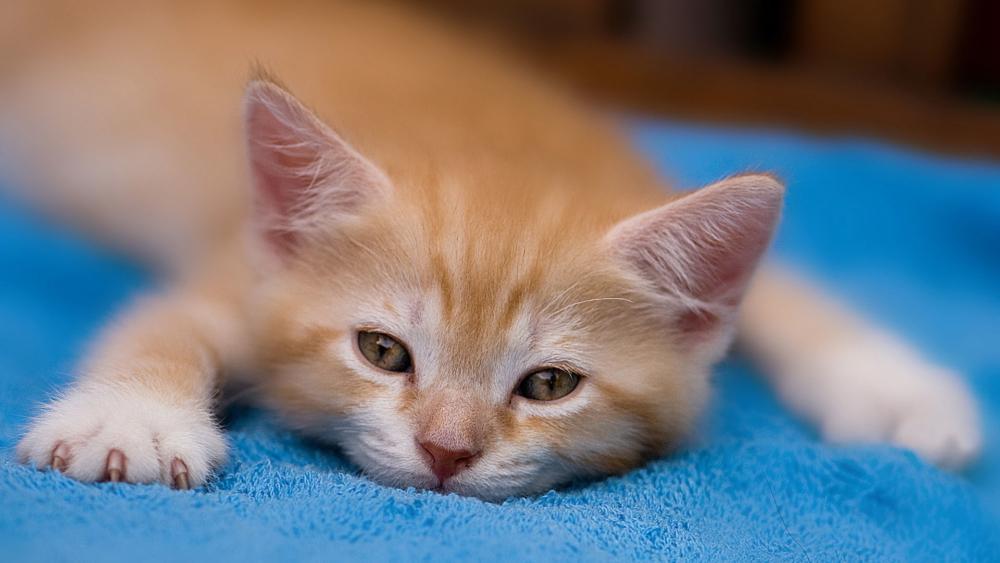 Nama Nama Untuk Anak Kucing Lelaki Dan Perempuan Jarang Dan Cantik Lucu Dan Comel Bagaimana Memilih Nama Panggilan Bergantung Pada Warna Dan Sifat Haiwan Peliharaan