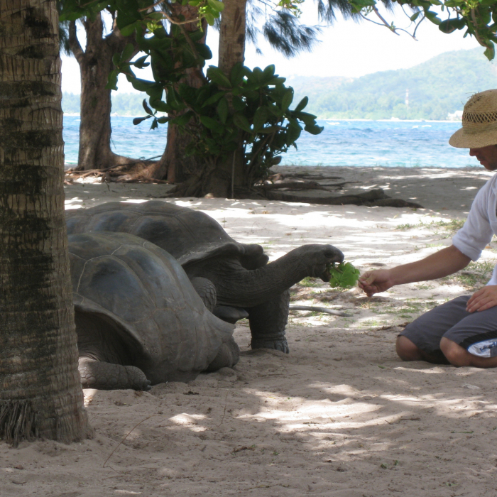 milzu seišelu bruņurupucis