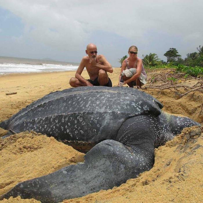 lielākais bruņurupucis pasaulē