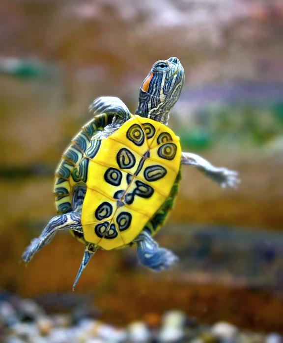blessures et brûlures chez les tortues