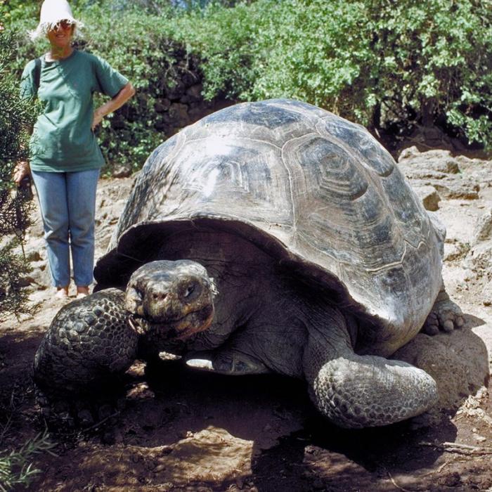 ziloņu bruņurupucis