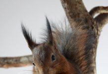 écureuil fait maison